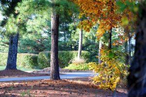 ps-fall-2012-trees