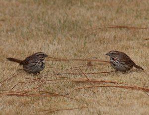 Birdwatching at Park Springs